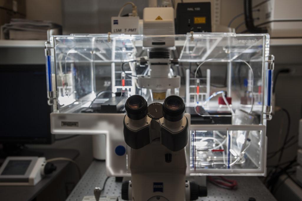 NeuroTechnology Studio